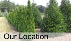 Cobb Tree Shrub Nursery Location In Morganton Nc